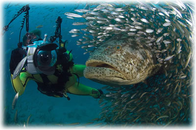 Photgraphy while scuba diving